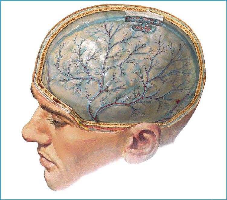 Поражение головного мозга при менингите
