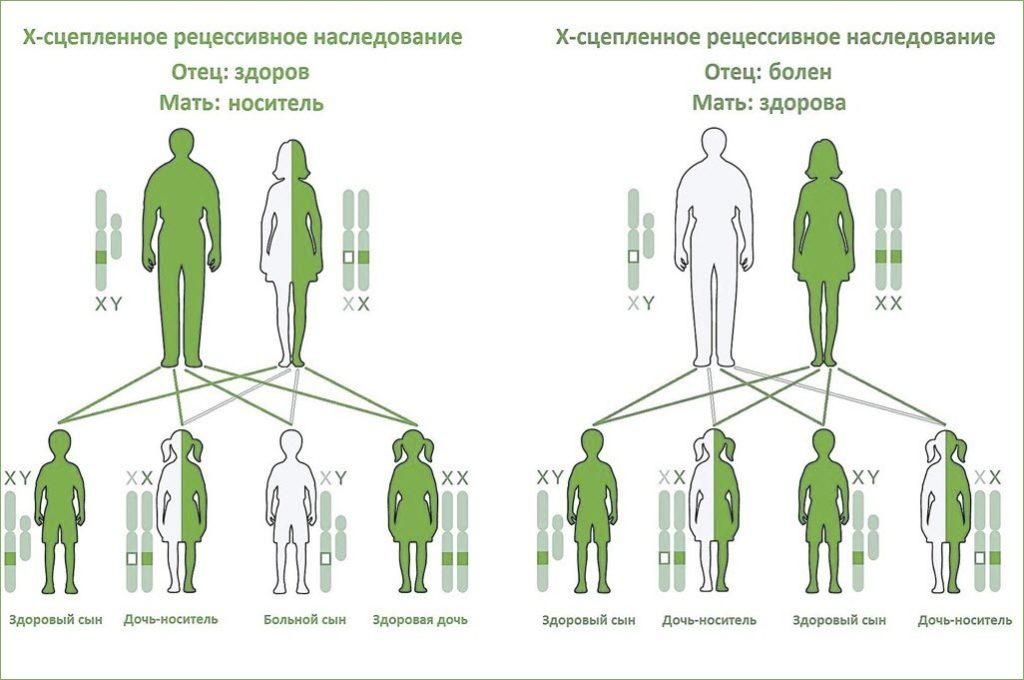 Генетическое наследование