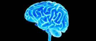 Роль человеческого мозга